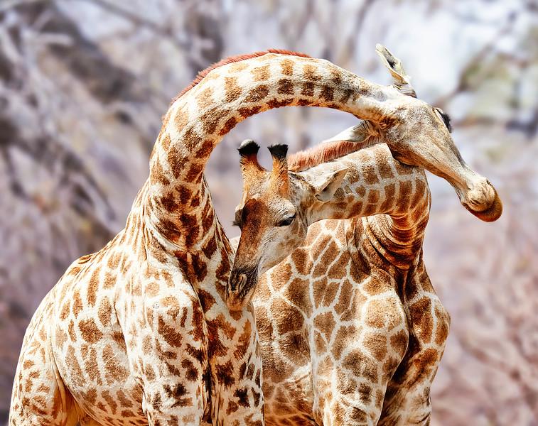 Giraff brighter.jpg