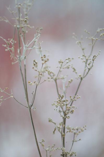 grey-weeds.jpg