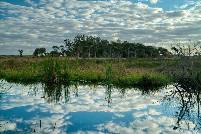 Florida Prairie 2020-4.jpg