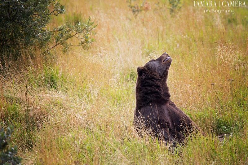 Bear2-5-2.jpg