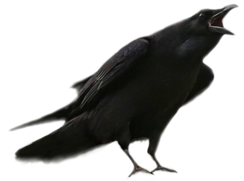 Raven 8.png