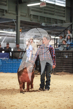 Swine Showmanship