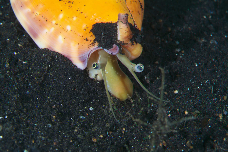 mollusk .jpg
