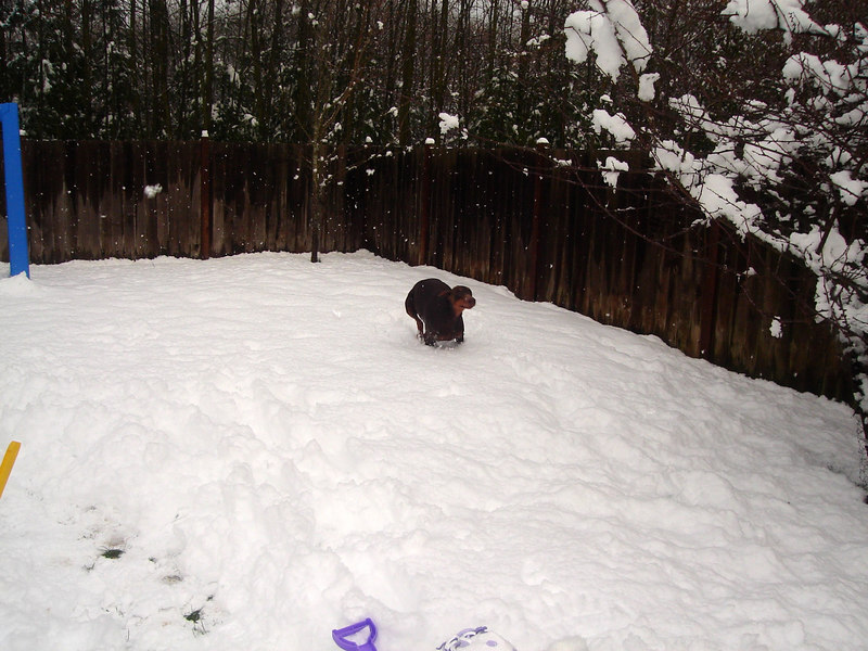 """Slone running in 9"""" of snow!"""