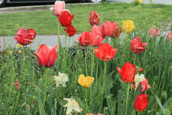 Azalea Garden..Fairmount Park Commission