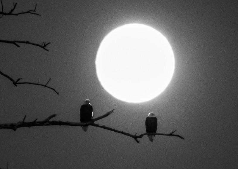 08-31-2020-eagle-moon-7.jpg
