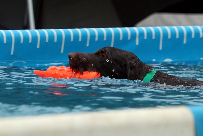 2015.8.7 Winnebago County Fair Dock Dogs (16).JPG