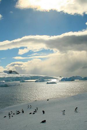 Wild Antarctica, November 2006