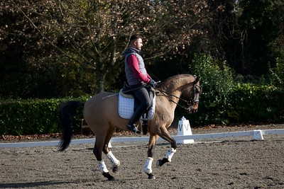 Lusitano Horse for Sale - Dressage, Working Equitation