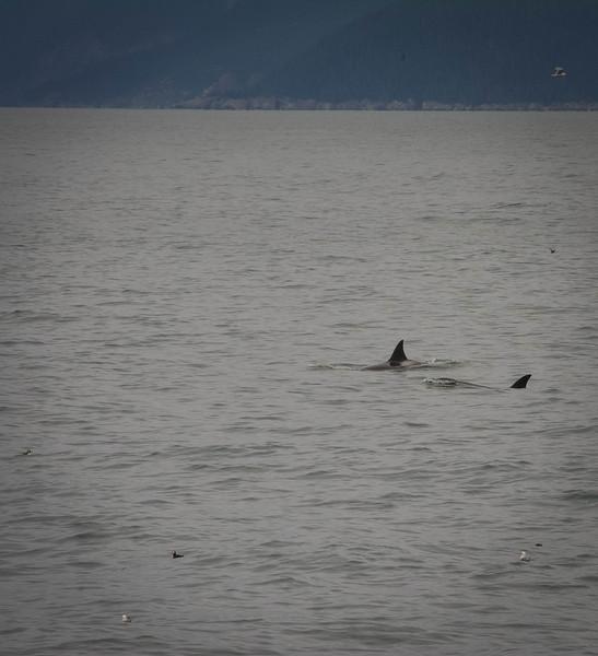Kenai-Fjords-182.jpg