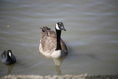 2010-03-27 Evergreen Village Lake