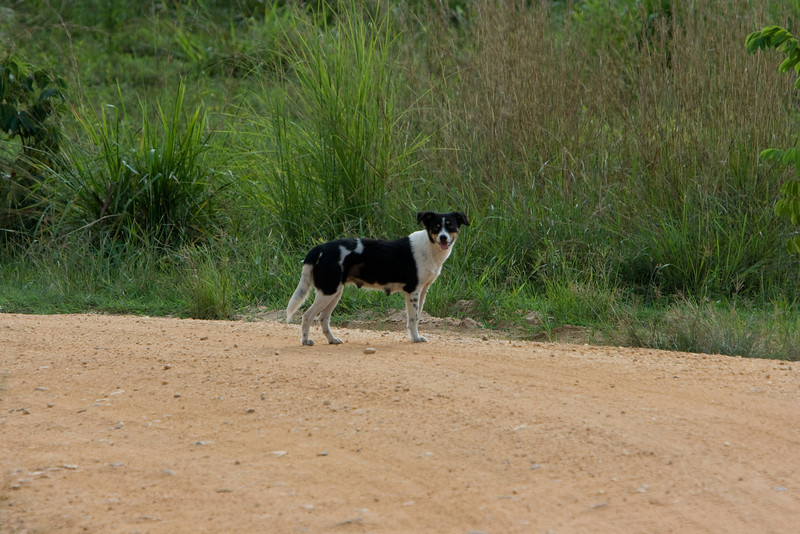 Dog on the road near Lope National Park.