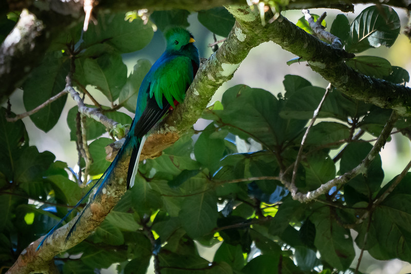 Costa Rica-1403.jpg