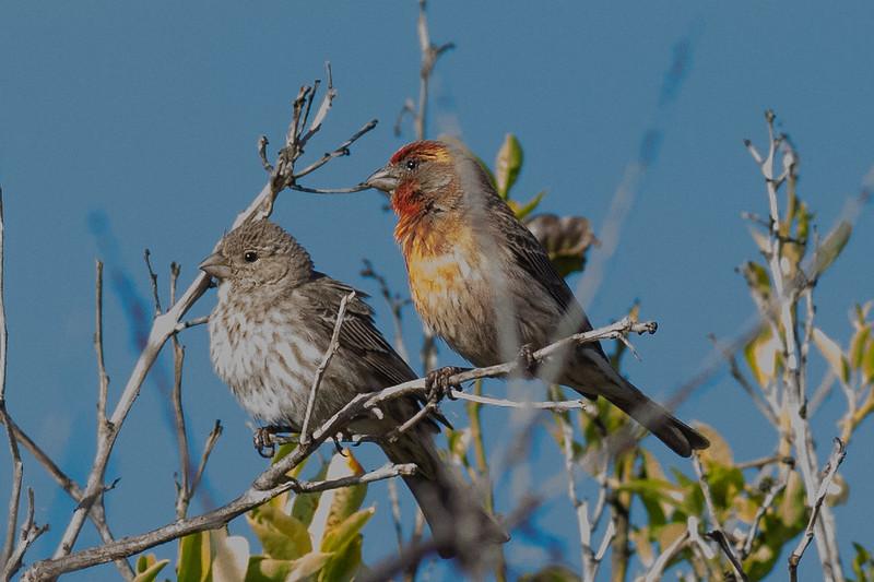 2birds-0015.jpg