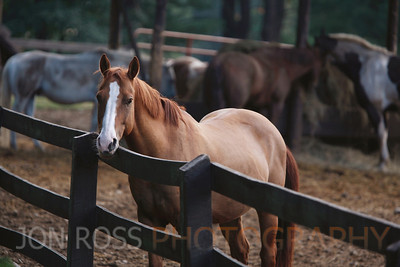 Ridin-Hy Ranch 2010