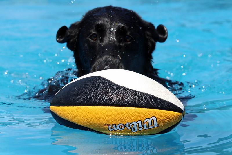 2015.8.6 Winnebago County Fair Dock Dogs (11).JPG