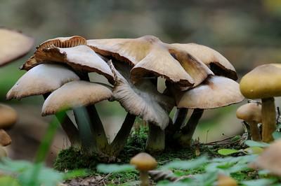 Mushroom DoF Test