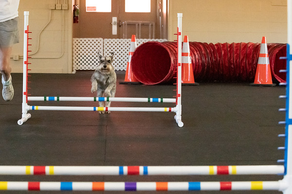 All About Dogs Training Center