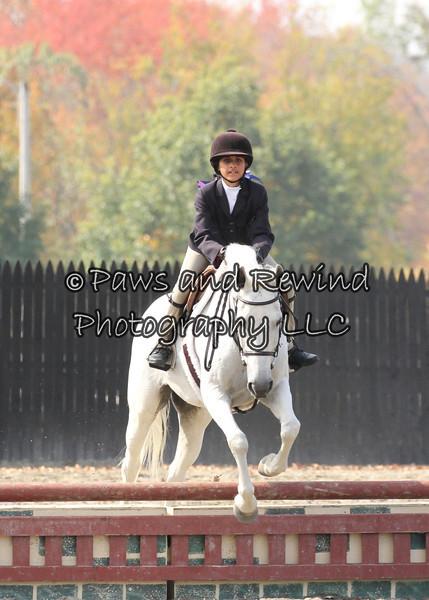 Ring II:  Adult Amateur/Children Hunter Horse/Pony
