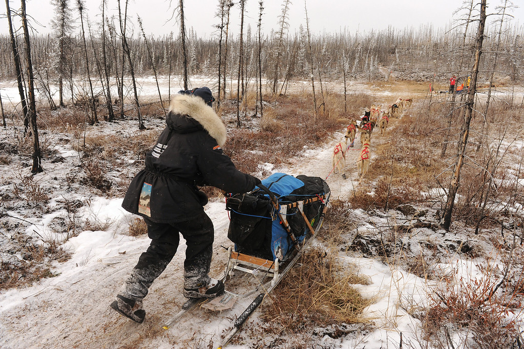 . Kristy Berington mushes down the Iditarod Trail in the middle of the Farewell Burn during the 2014 Iditarod Trail Sled Dog Race on Tuesday, March 4, 2014.  (AP Photo/The Anchorage Daily News, Bob Hallinen)