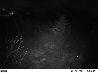 Trail Cam 2011