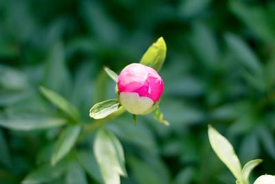 Longwood Gardens Spring Blooms