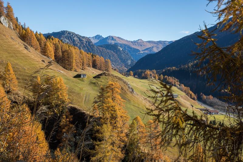 Herbst-im-Rheinwald--11.jpg