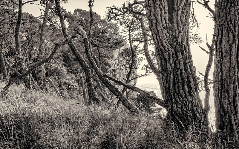 Enchanted Forest #6