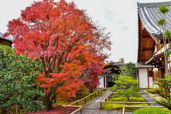 Kyoto Koyo 2019  Vol.2