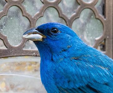 05-10-2019-birds