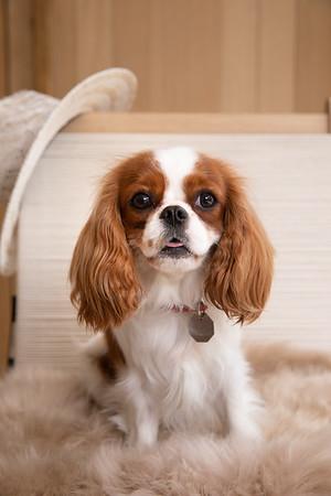 Jenni Kayne Pet Portraits 2019