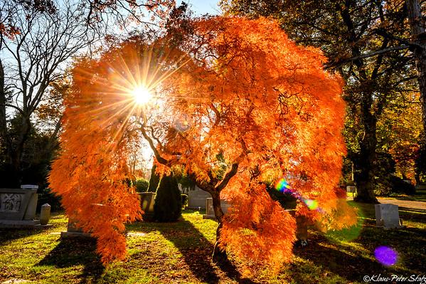 Woodlawn Fall Colors November 2020