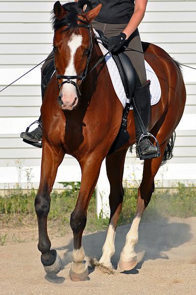 Horses July 2011 215a.jpg