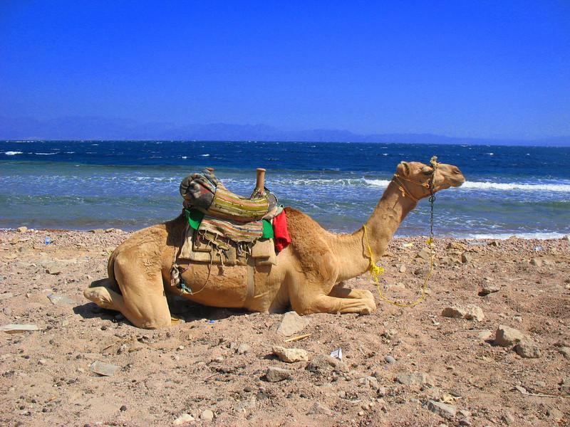 Egypt-631.jpg