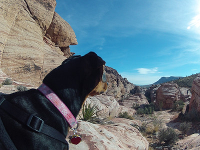 Izzy at Red Rock 12-16-12
