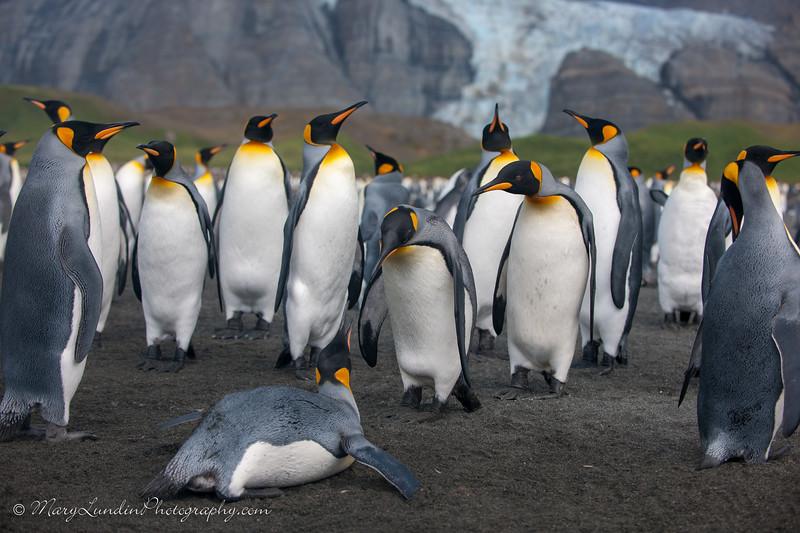 Antarctic-98