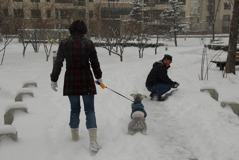 [20100103] 1st 2010 Snow in Beijing (23).JPG