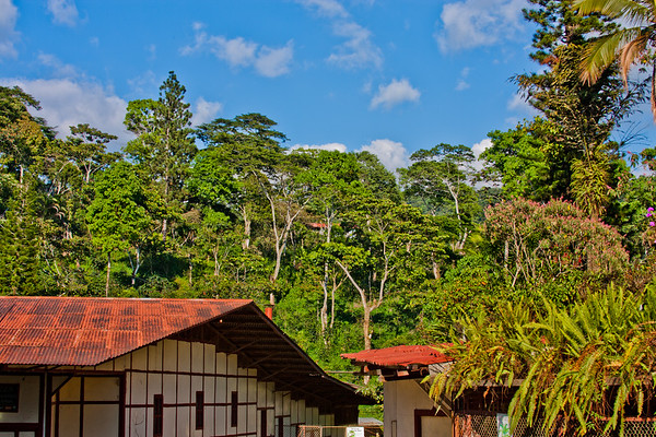 Other Finca Two