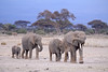 Photograph of a group of elephants walking across the African plains. Photography fine art photo prints print photos photograph photographs image images artwork.