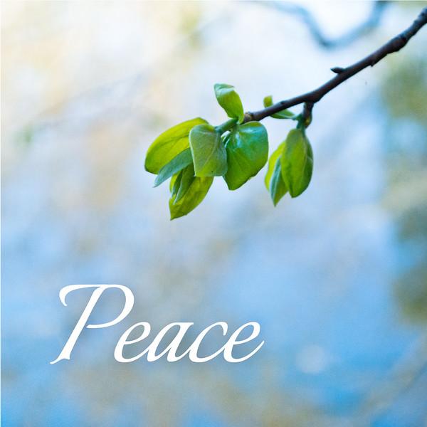 48_Galatians5-22-23_NJ_Fruit of the Spirit_4-23-17_3-Peace.jpg
