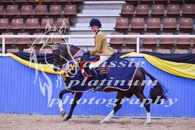 Class 2 Sm Show Hunter Horse 15 -16hh