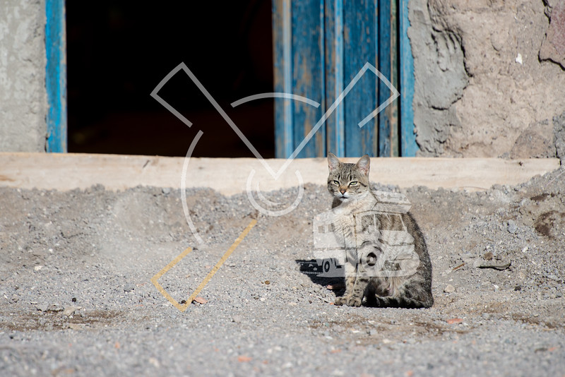cat sitting at the blue door of a small house in the Bolivian altiplano