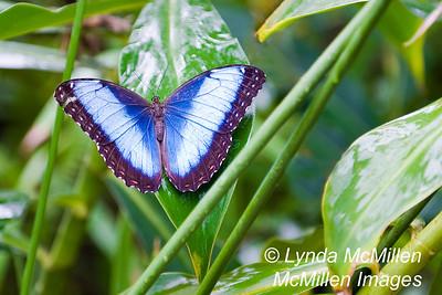 BVI Butterflies