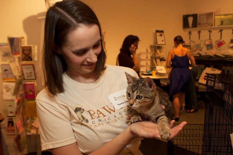 Kitten 2 (20120826-022).jpg