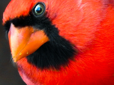 Red & Pink Birds