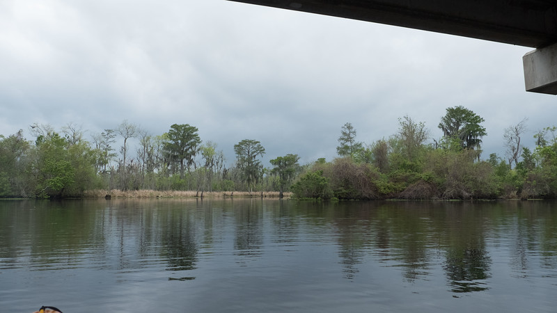 ManchacSwamp-6892.jpg