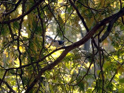 Birding List