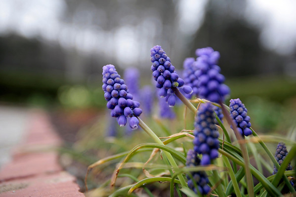 Spring Comes to The Mount in Lenox-042914