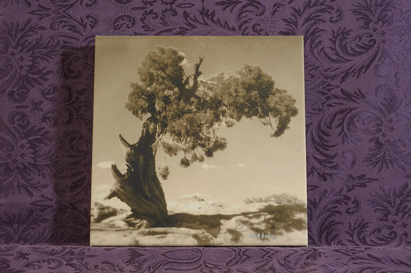 Wind Swept Tree - $40