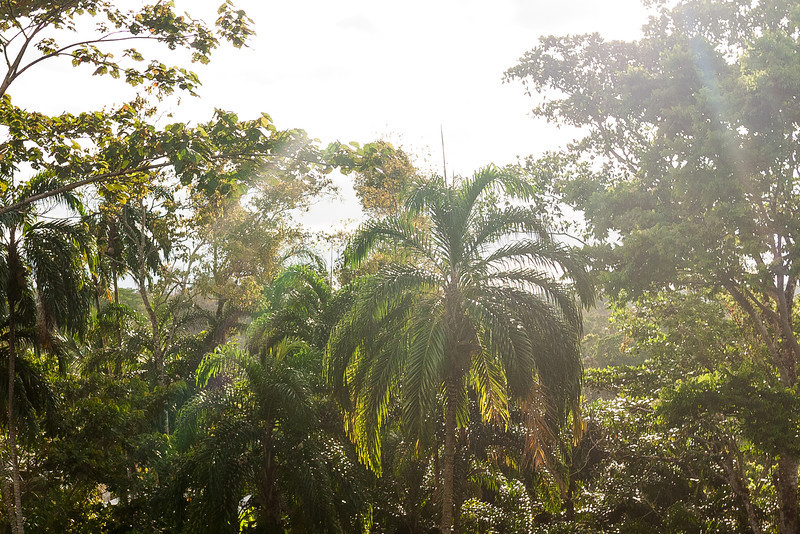 Urari, Panama-7.jpg